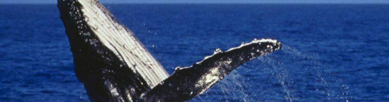 Estudo Bíblico Sobre o Desafio Baleia Azul: O Jogo da Morte